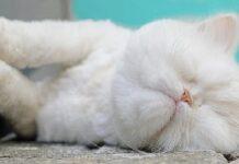 gatto diventa popolare raccoglie fondi per i più bisognosi
