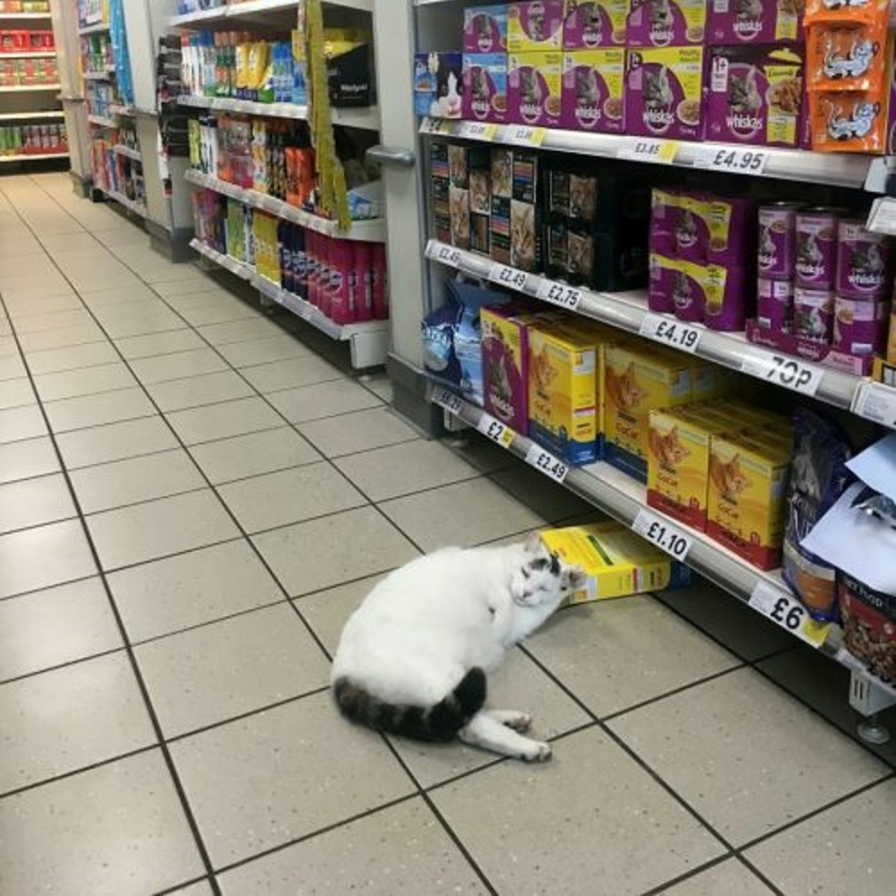 gatto ladro supermercato cibo