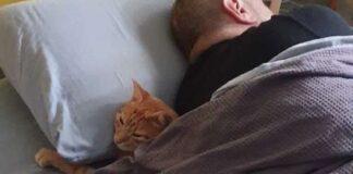 gatto si intrufola casa vicini per dormire