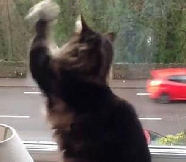sox gatto abitudine saluto