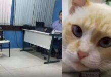 gattino scappa di casa per andare università