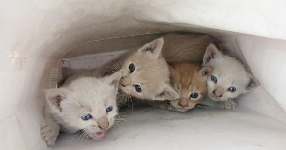 salvataggio 4 gattini chiusi dentro busta regalo
