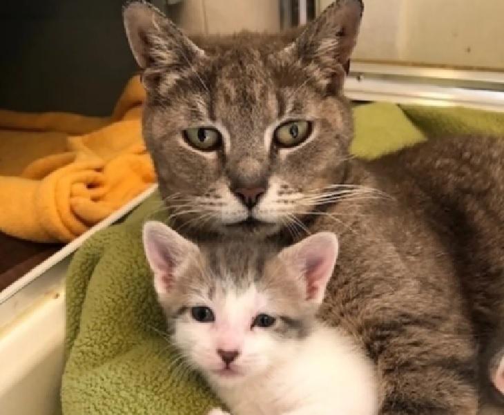 mamma delancey ruolo madre