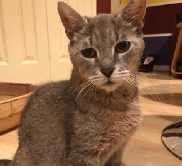 delancey gatta adozione uomo