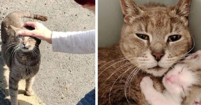 il salvataggio di mamma delancey e suoi gattini