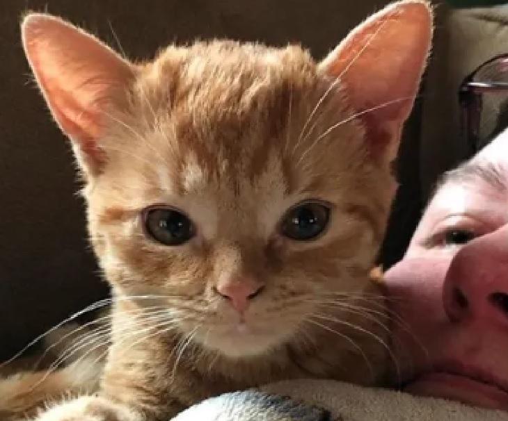tate adottato gatto fondazione