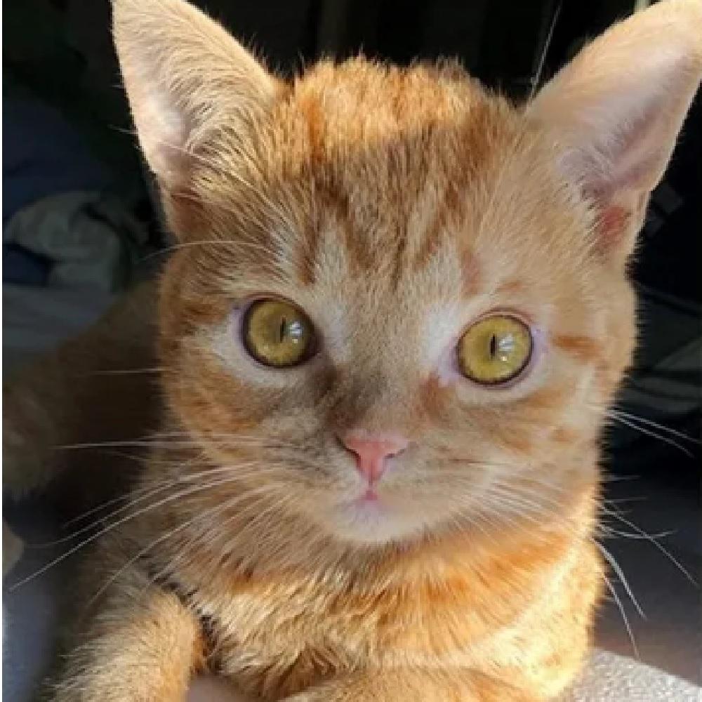 tate gattino segretario jen