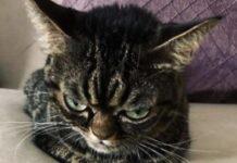 kitzia la gattina sempre di pessimo umore
