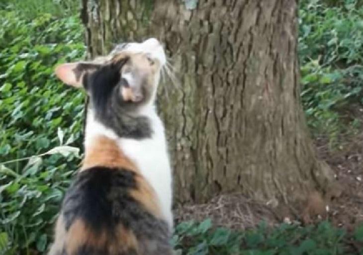 gattino chiede aiuto mamma per scendere