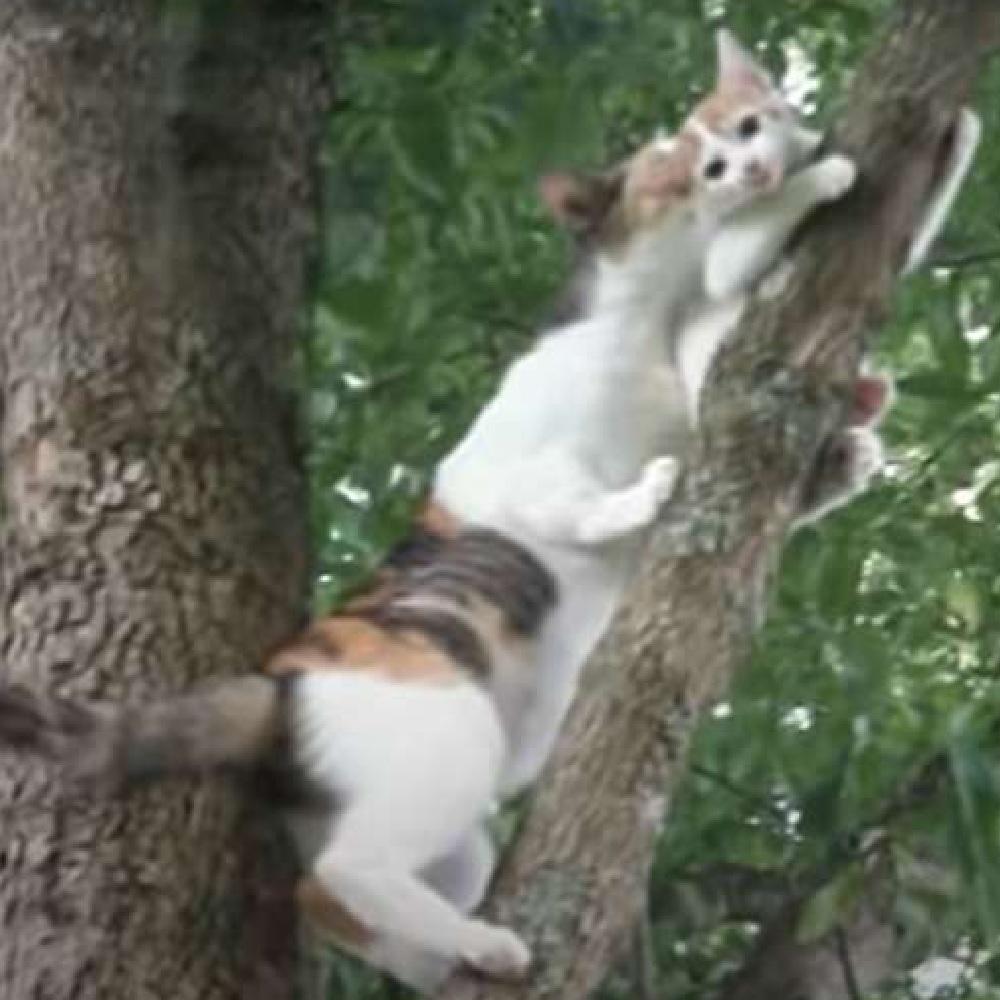 gattino arriva soccorso mamma albero