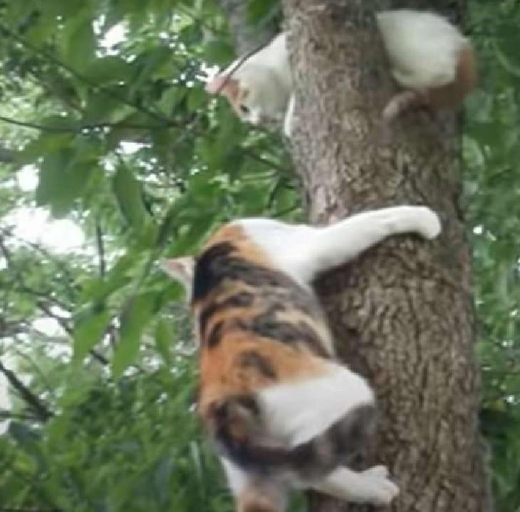 gattino arriva aiuta madre pianta