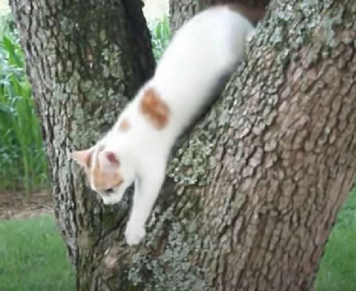 gattino scende pianta seguendo mamma
