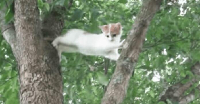 mamma gatto insegna figlio scendere albero