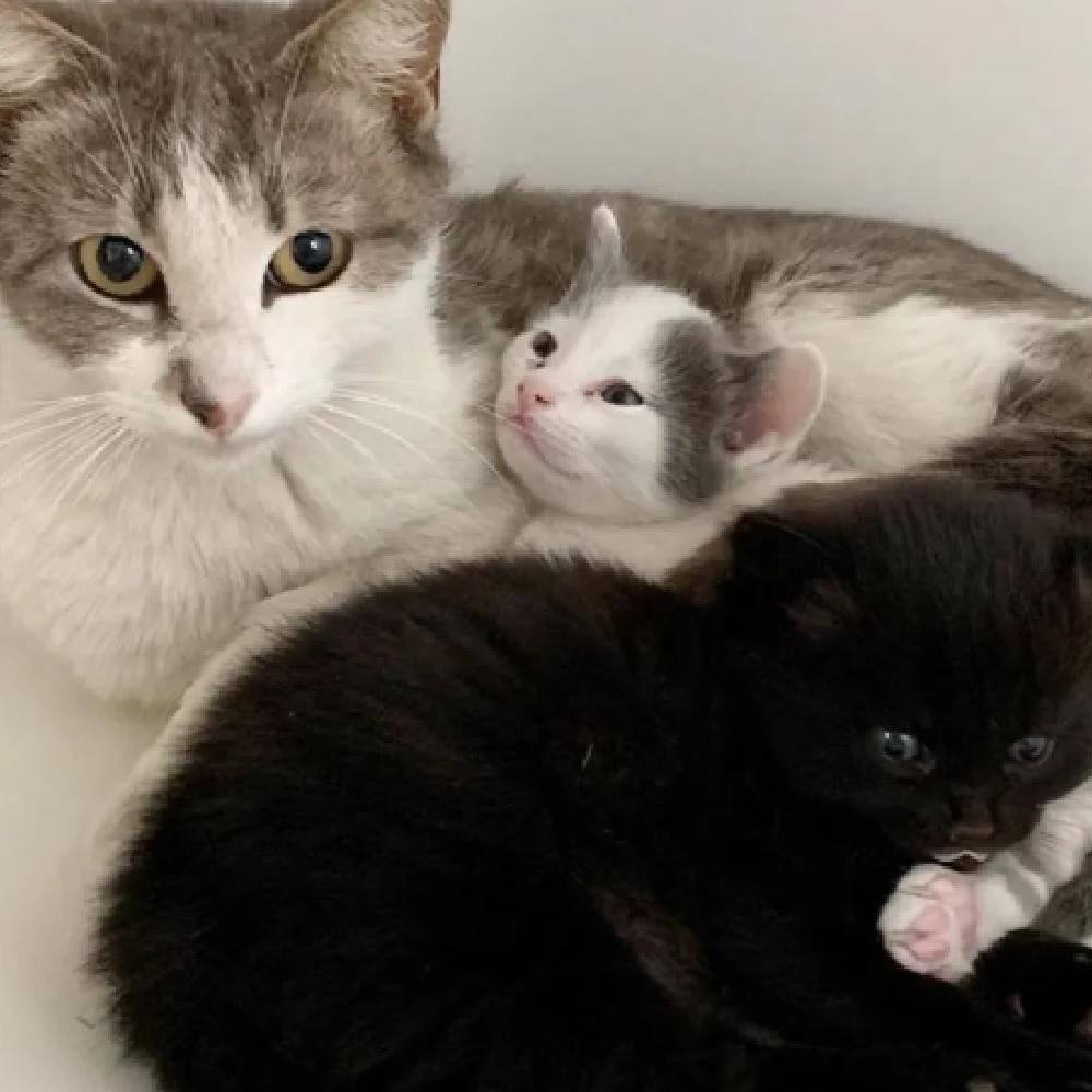 skippy mamma gatto accoglienza