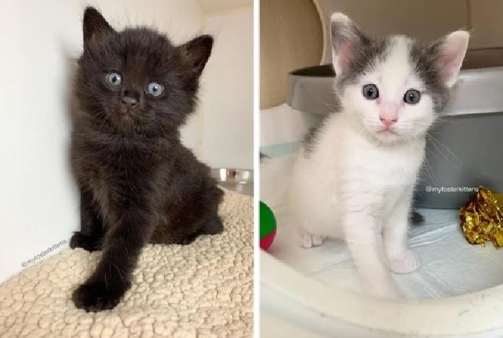 skippy gattini adozione famiglie