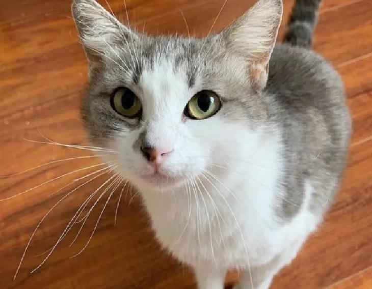skippy gatto trova casa