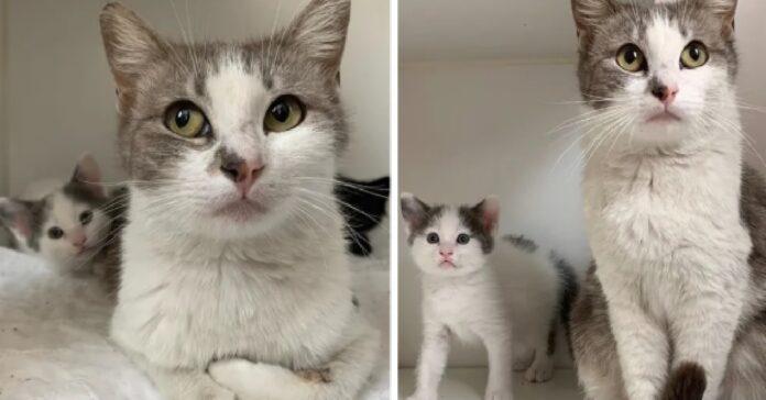 mamma gatto trova giusta casa crescere due gattini