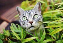 gatto in mezzo alle piante