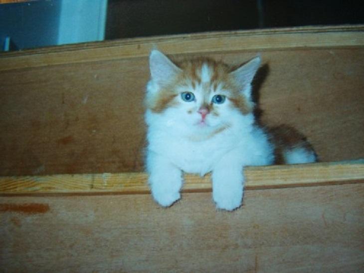 rubble piccolo gatto record