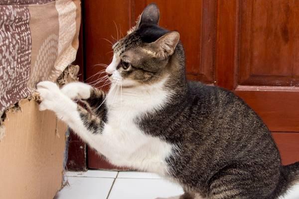perché il gatto rovina i mobili