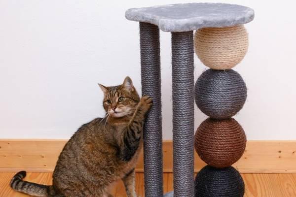 scegliere il tiragraffi per il gatto