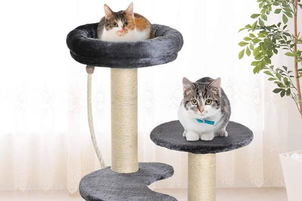 gatti che vivono insieme in casa