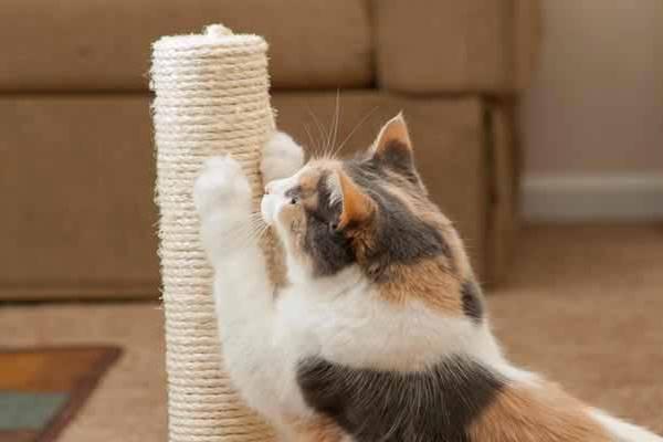 gatto che si fa le unghie