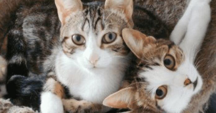 Gattini vicini che guardano in alto