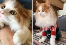 Gattino paralizzato