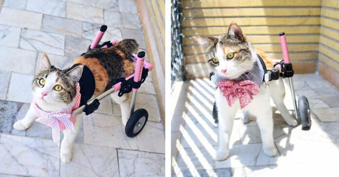 Gattino con un carrellino