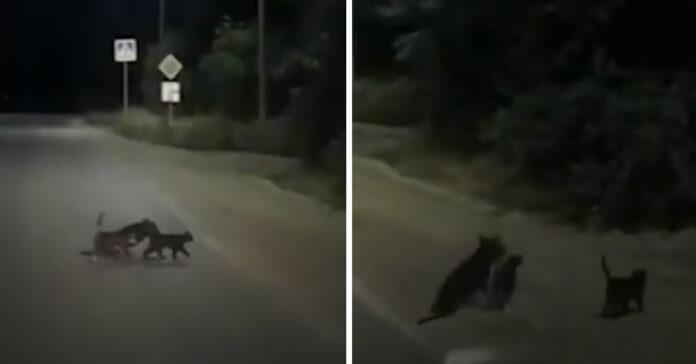 Gattini che aiutano un cane ad attraversare la strada