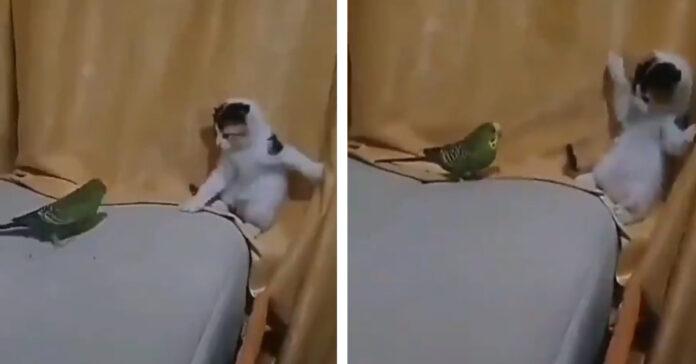 Gatto che gioca con un pappagallo