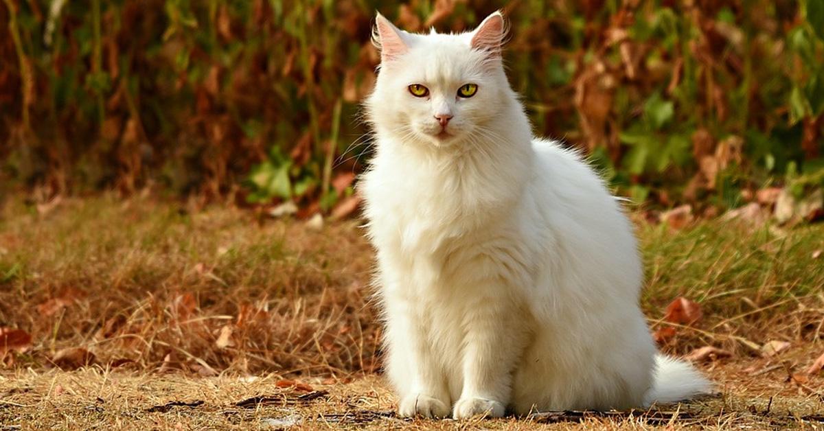 Gatto bianco seduto