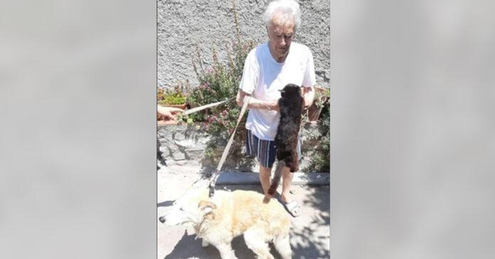 Gattino con il padrone e un cane