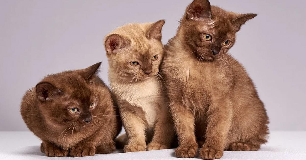 Tre gattini che osservano