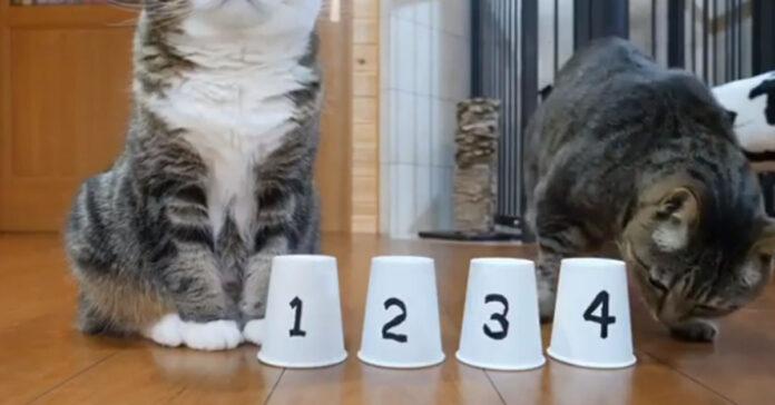Gattino trucco di magia