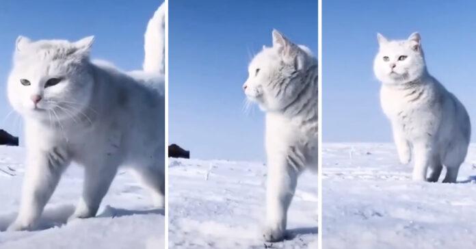Gatto che cammina nella neve