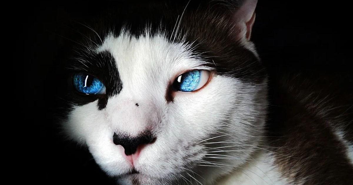 Gatto con gli occhi chiari