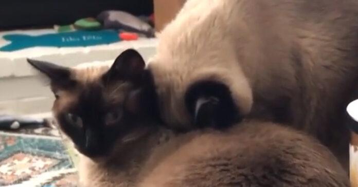 Gattino dorme in una posizione assurda