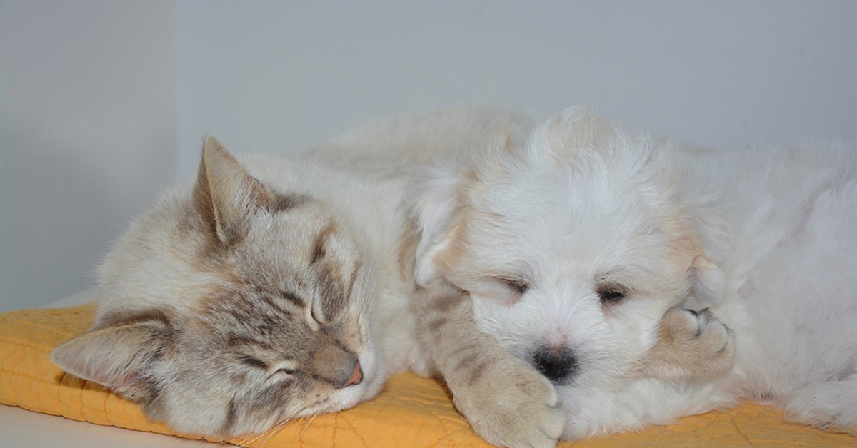 Gattino che dorme con un cane