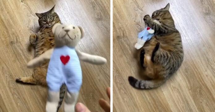 Gatto con un peluche