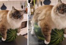Gattino sopra ad un'anguria