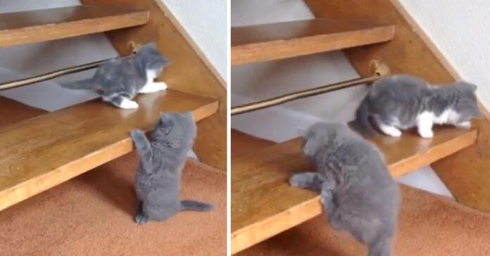Gattino prova a salire le scale