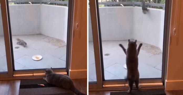 Gatto con uno scoiattolo