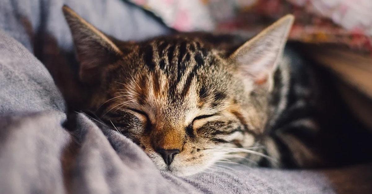 Gattino che dorme