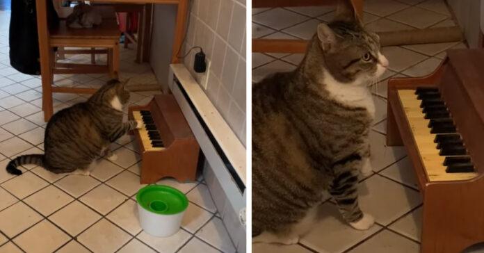 Gattino suona un pianoforte