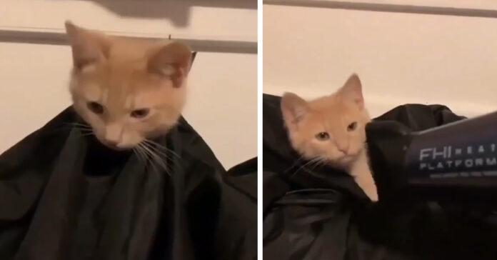 Gattino rosso dal parrucchiere