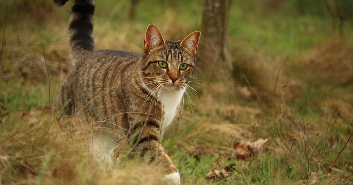 Gatto che cammina in un bosco