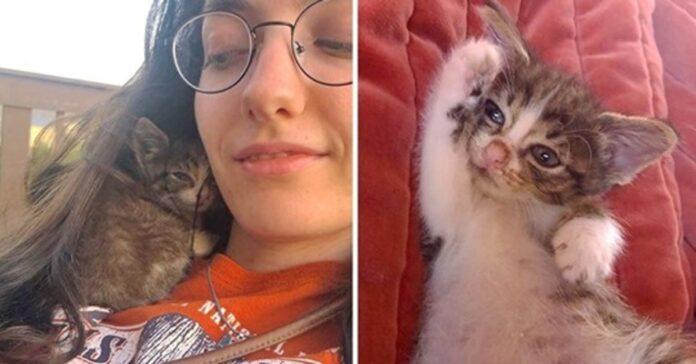 gatto con ragazza