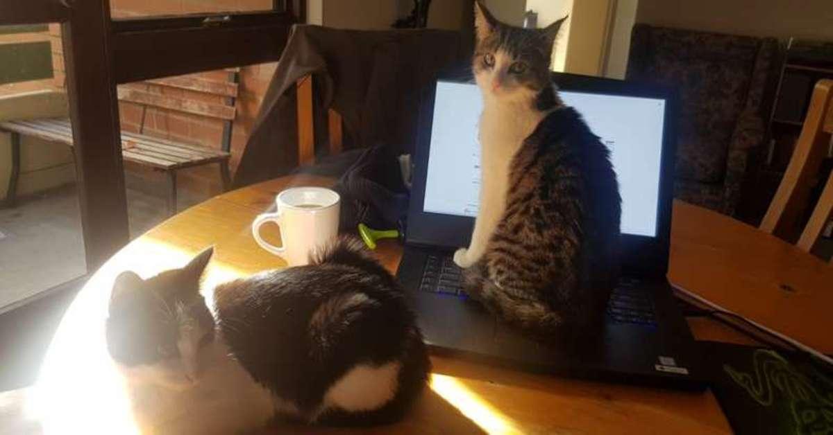 gatti su un tavolo